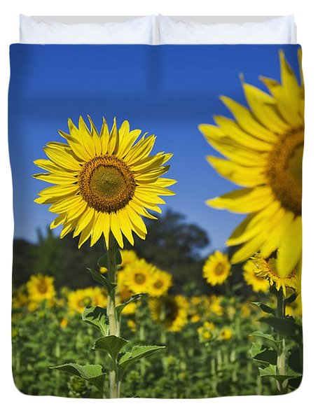 Sunflower Duvet Cover by Dennis Flaherty and Photo Researchers