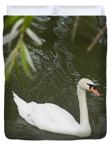 Swan Enjoying A Swim Duvet Cover by Corinne Elizabeth Cowherd