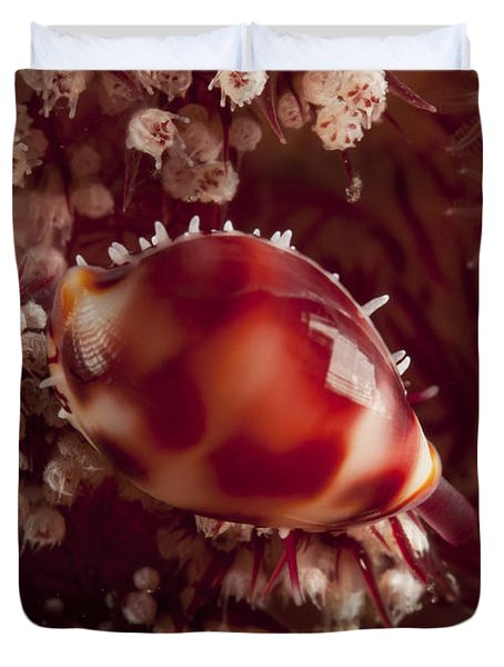 Tiny Cowrie Shell On Dendronephtya Soft Duvet Cover by Mathieu Meur