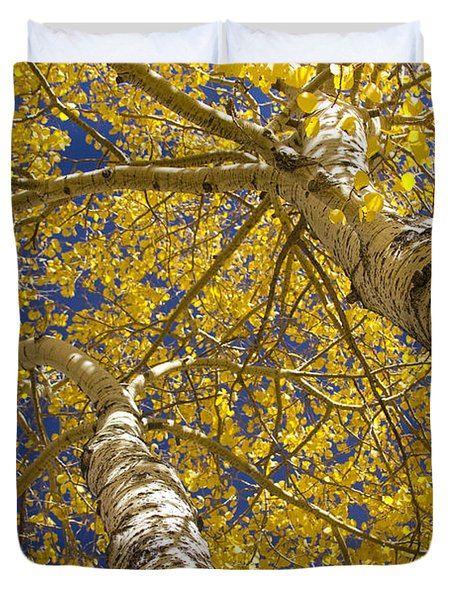 Towering Autumn Aspens With Deep Blue Sky Duvet Cover by James BO  Insogna