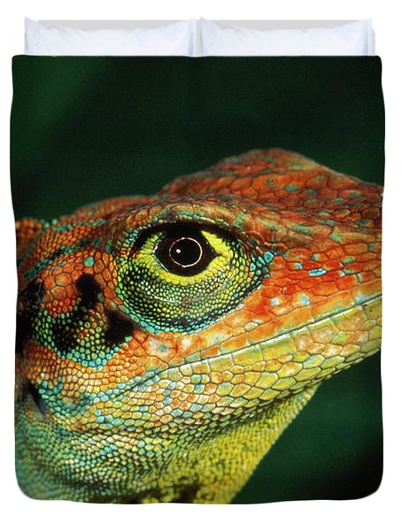 Transverse Anole Anolis Transversalis Duvet Cover by Murray Cooper