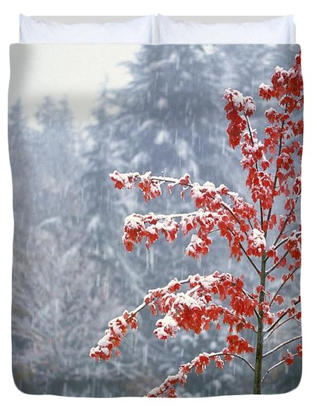 Tree In The Winter Duvet Cover by Natural Selection Craig Tuttle