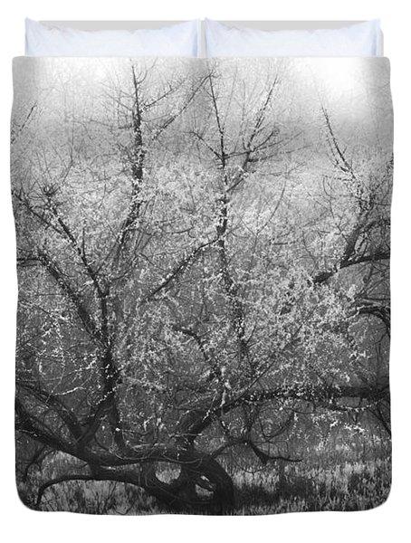 Tree of Enchantment Duvet Cover by Debra and Dave Vanderlaan