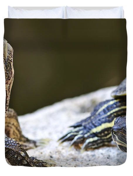 Turtle conversation Duvet Cover by Elena Elisseeva