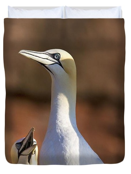 Two Gannets Interacting Perce, Quebec Duvet Cover by Richard Wear