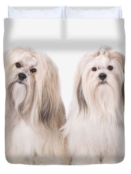 Two White Lhasa Apso Puppies St. Albert Duvet Cover by Corey Hochachka
