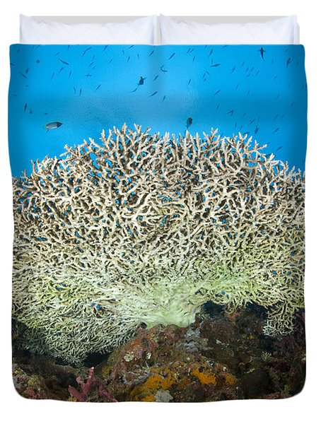 Underside Of A Table Coral, Papua New Duvet Cover by Steve Jones