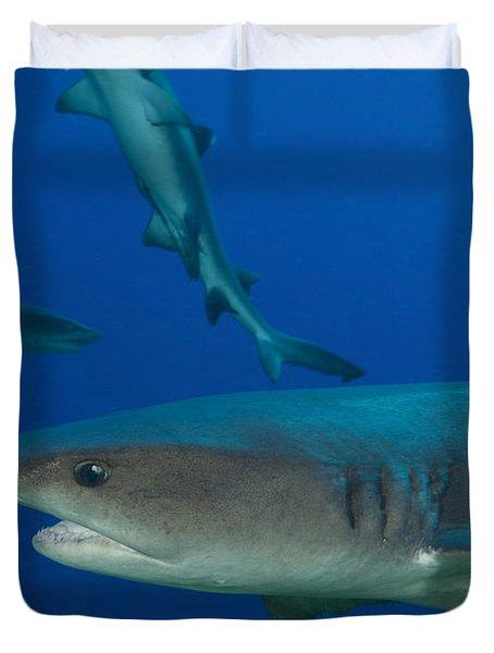Whitetip Reef Shark, Papua New Guinea Duvet Cover by Steve Jones