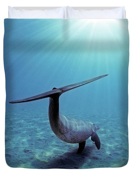 Wild Bottlenose Dolphin Duvet Cover by Jeff Rotman and Photo Researchers