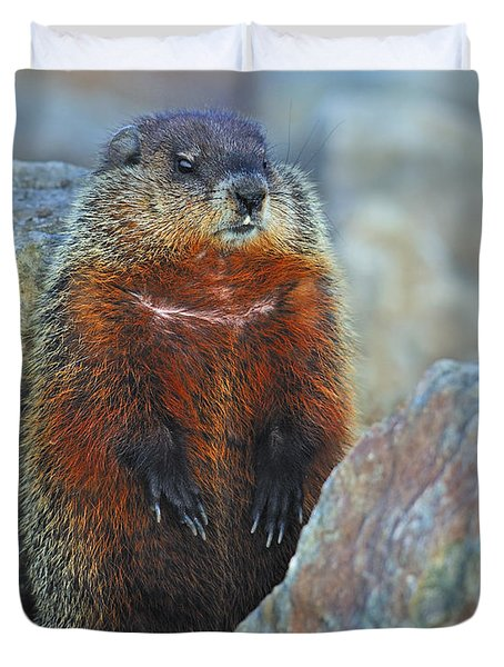 Woodchuck Duvet Cover by Tony Beck