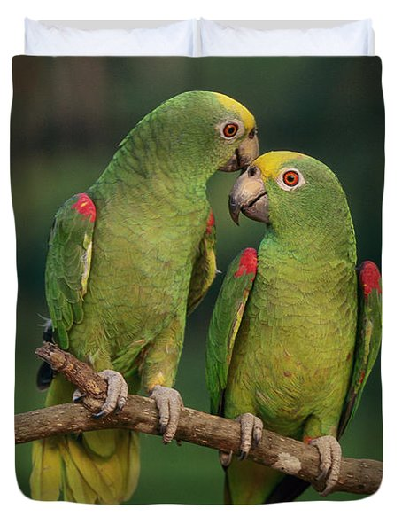 Yellow-crowned Parrot Amazona Duvet Cover by Thomas Marent
