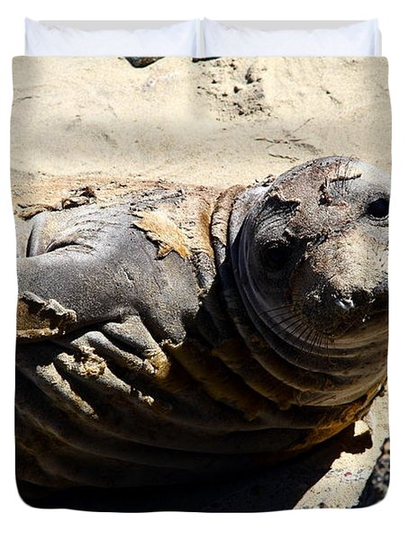 Young Elephant Seal Molting . 7d16091 Duvet Cover by Wingsdomain Art and Photography