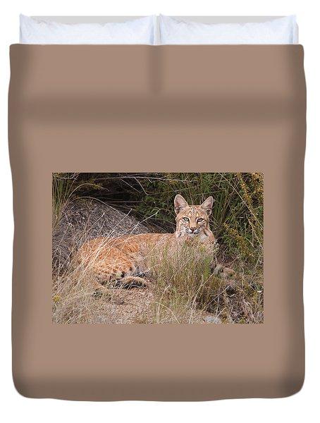 Bobcat At Rest Duvet Cover by Alan Toepfer