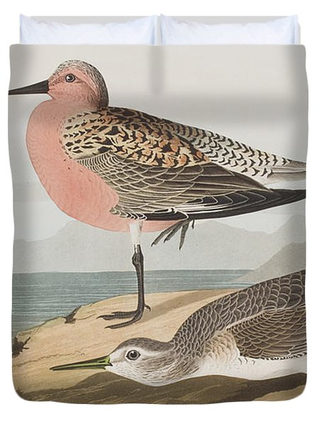 Red-breasted Sandpiper  Duvet Cover by John James Audubon