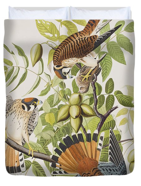 American Sparrow Hawk Duvet Cover by John James Audubon