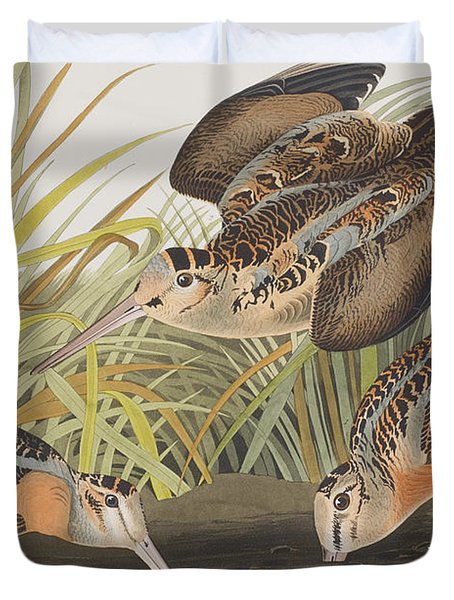 American Woodcock Duvet Cover by John James Audubon