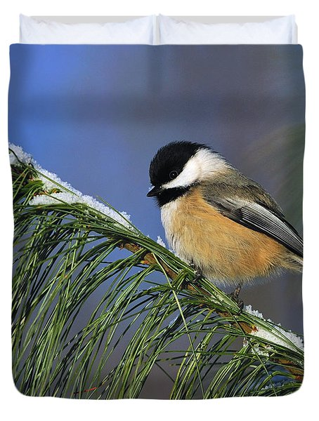 Black-Capped Chickadee Duvet Cover by Tony Beck