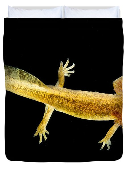 California Giant Salamander Larva Duvet Cover by Dant� Fenolio