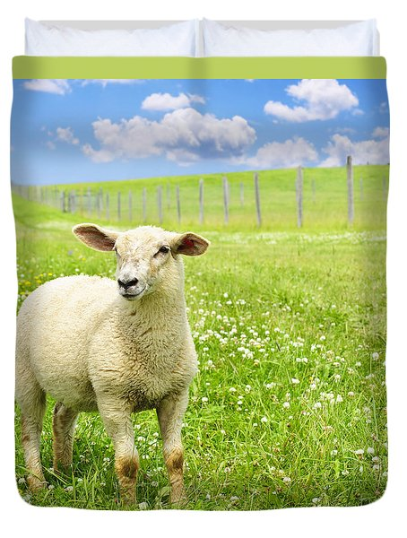 Cute Young Sheep Duvet Cover by Elena Elisseeva