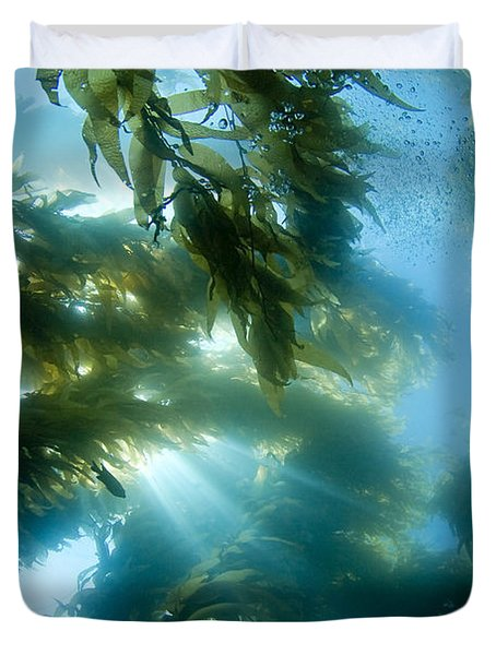 Giant Kelp Forest Duvet Cover by Dave Fleetham - Printscapes