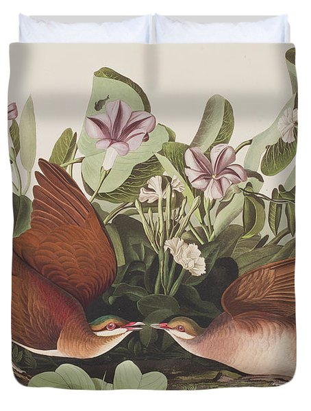Key West Dove Duvet Cover by John James Audubon