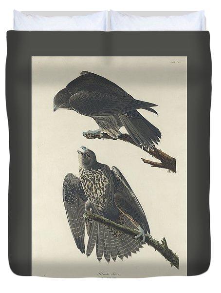 Labrador Falcon Duvet Cover by John James Audubon