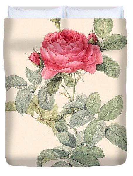 Rosa Gallica Pontiana Duvet Cover by Pierre Joseph Redoute