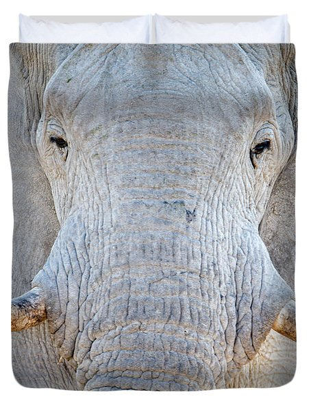 African Elephant Loxodonta Africana Duvet Cover by Panoramic Images