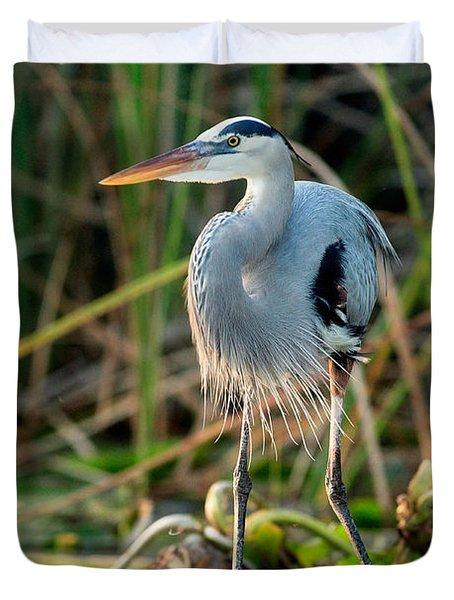 Great Blue Heron Duvet Cover by Matt Suess