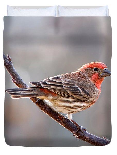 House Finch Duvet Cover by Betty LaRue