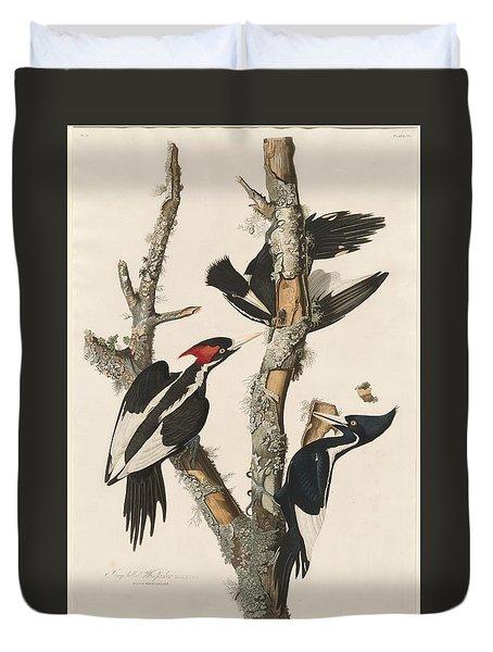 Ivory-billed Woodpecker Duvet Cover by John James Audubon