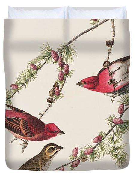 Purple Finch Duvet Cover by John James Audubon