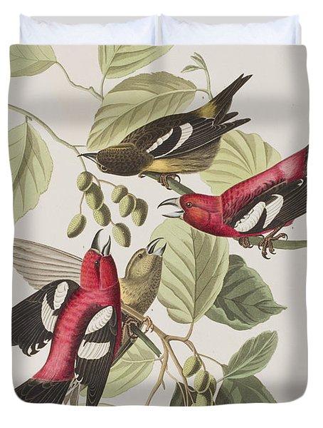 White-winged Crossbill Duvet Cover by John James Audubon
