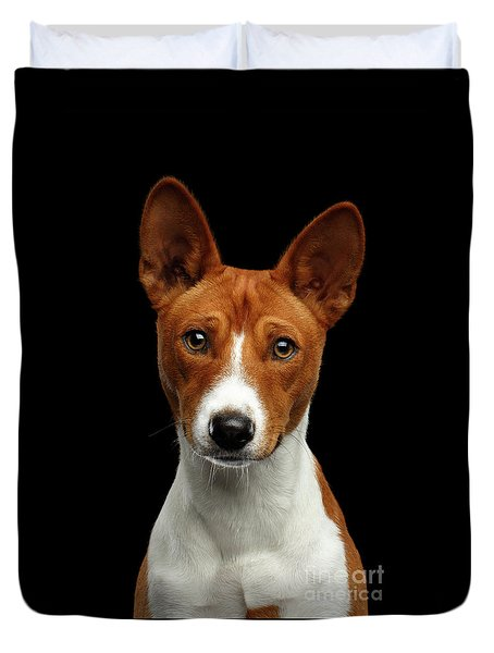 Pedigree White With Red Basenji Dog On Isolated Black Background Duvet Cover by Sergey Taran