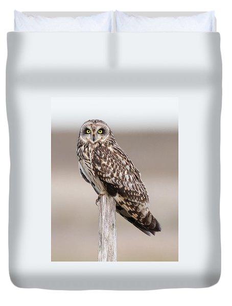 Short Eared Owl Duvet Cover by Ian Hufton
