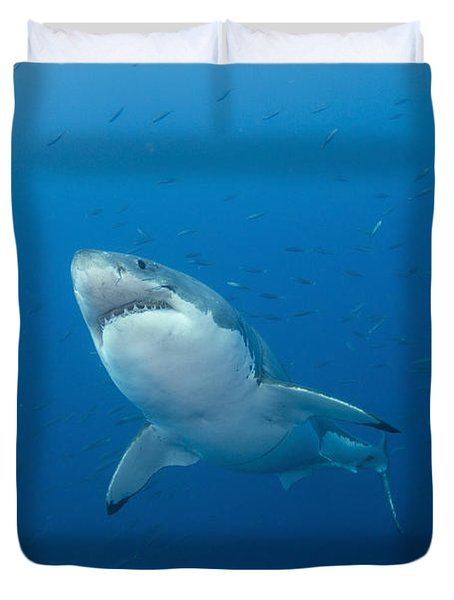 Male Great White Shark, Guadalupe Duvet Cover by Todd Winner