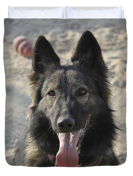 A Belgian Tervuren Military Working Dog Duvet Cover by Stocktrek Images