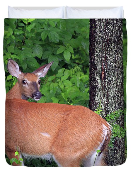 A Doe Within The Trees Duvet Cover by Karol Livote