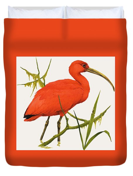 A Scarlet Ibis From South America Duvet Cover by Kenneth Lilly