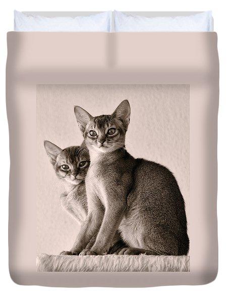 Abyssinian Kittens Duvet Cover by Ari Salmela