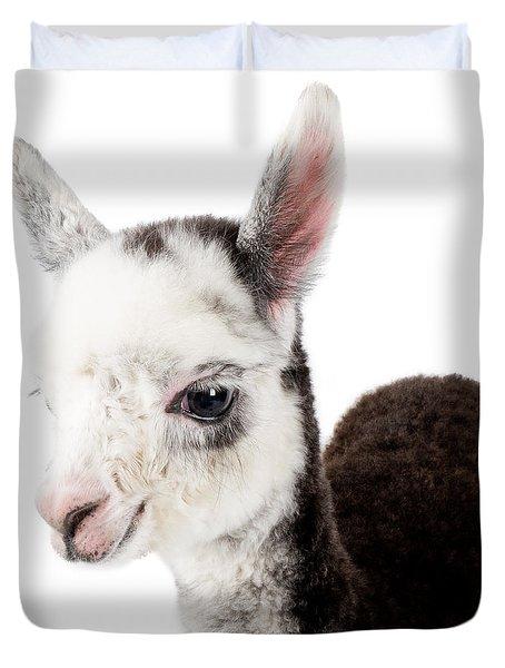 Adorable Baby Alpaca Cuteness Duvet Cover by TC Morgan