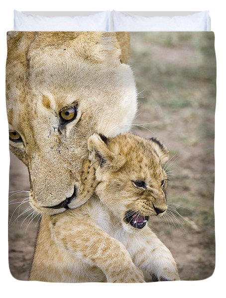 African Lion Mother Picking Up Cub Duvet Cover by Suzi Eszterhas