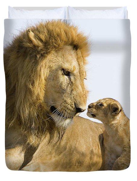 African Lion Panthera Leo Seven Duvet Cover by Suzi Eszterhas