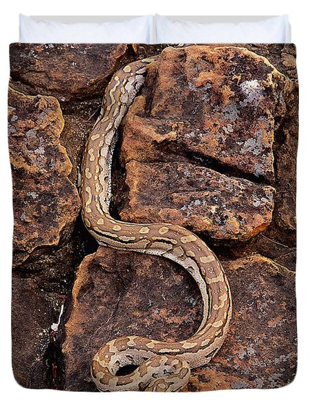 African Rock Python Duvet Cover by John Cancalosi