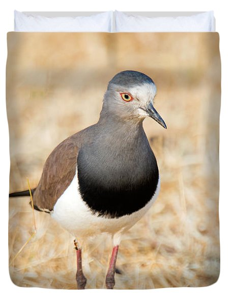 African Wattled Lapwing Vanellus Duvet Cover by Panoramic Images
