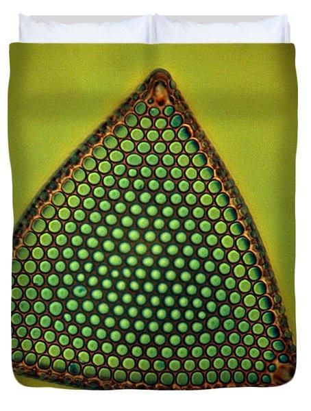 Algae, Diatom, Triceratium Ladus, Lm Duvet Cover by Eric Grave
