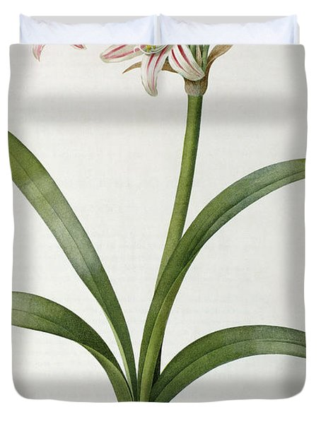 Amaryllis Vittata Duvet Cover by Pierre Redoute