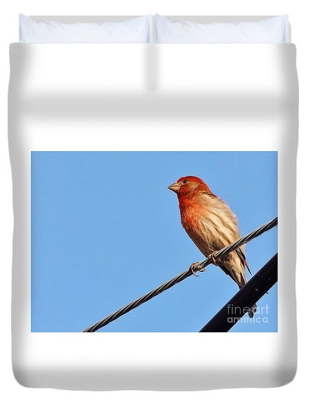American Crossbill On Wire     Spring   Indiana   Duvet Cover by Rory Cubel