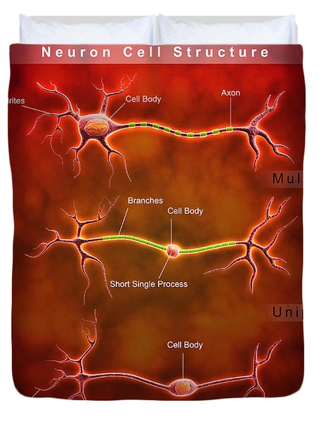 Anatomy Structure Of Neurons Duvet Cover by Stocktrek Images