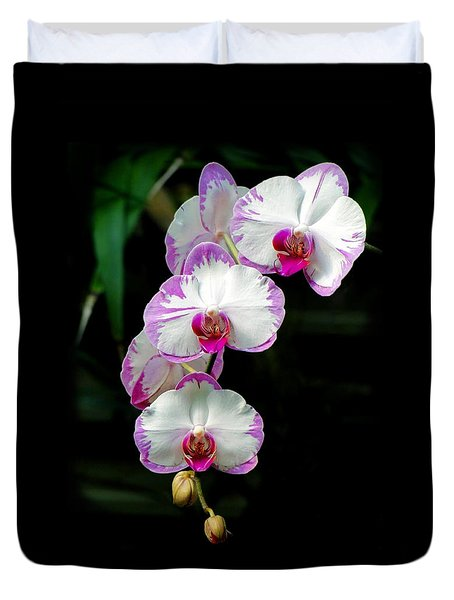 Cascading Orchid Beauties Duvet Cover by Sue Melvin